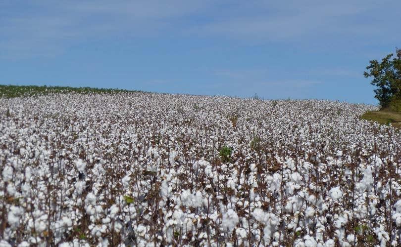 Zum-Weltwassertag-2019-Baumwolle-braucht-weniger-Wasser-als-behauptet